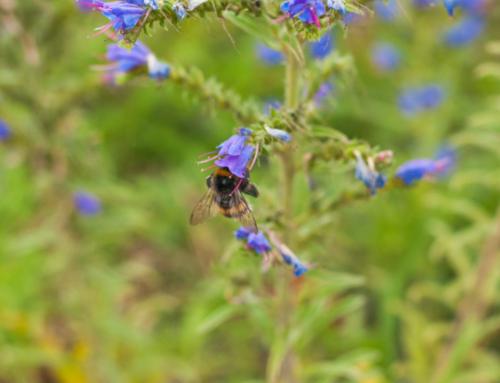 Die Rheinbahn greift den Bienen unter die Flügel